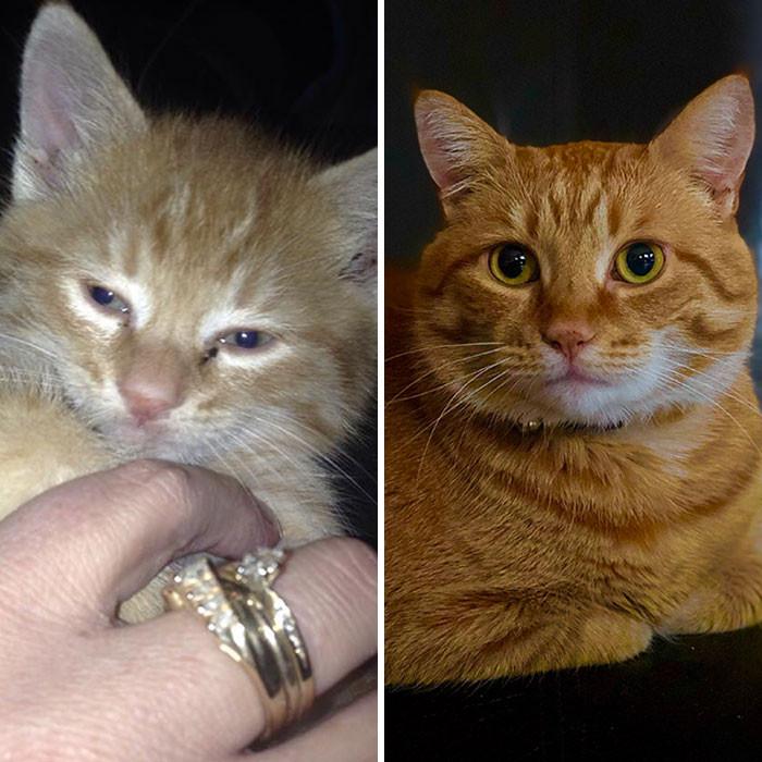 Милые котики до и после того, как они нашли любящий дом
