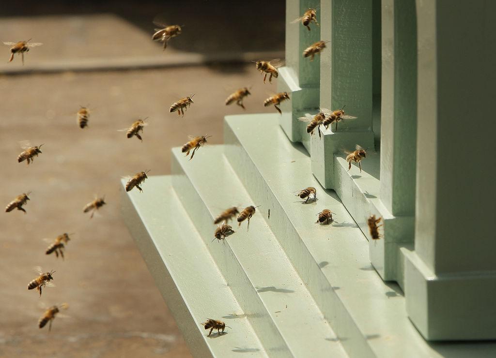 10 фактов о пчелах и их роли в мире
