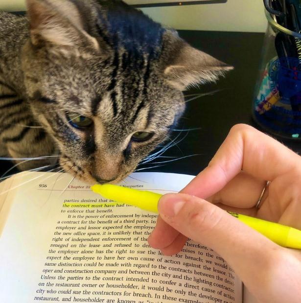 Животные помогают учиться, читать и работать дома