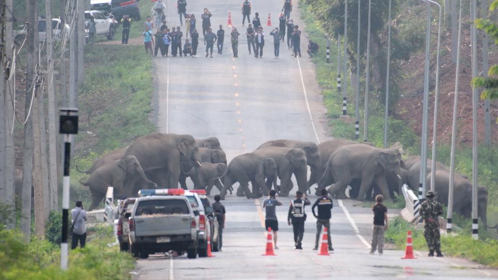 Снимки из Таиланда во время эпидемии