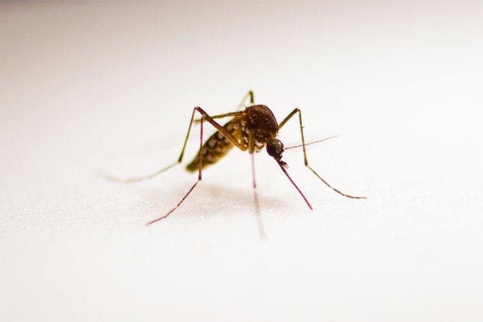 Как комары выбирают своих жертв