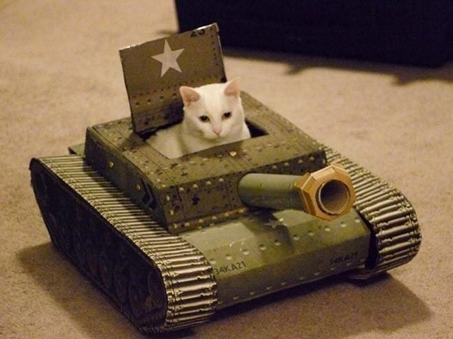 Котики в картонных танках