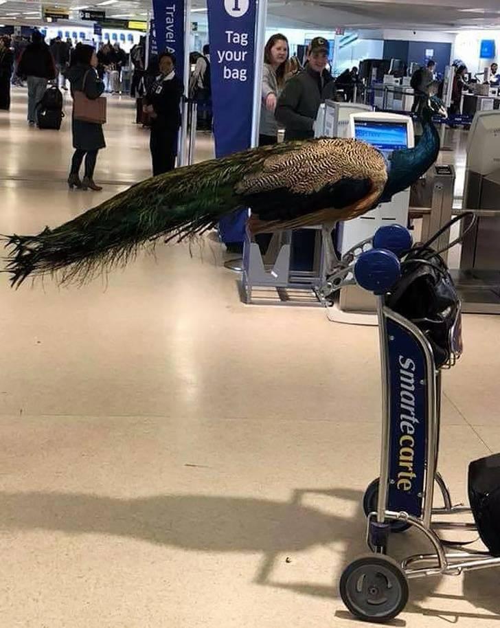 Неожиданные попутчики в самолётах