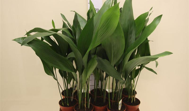 Растения для дома, которым не нужен солнечный свет