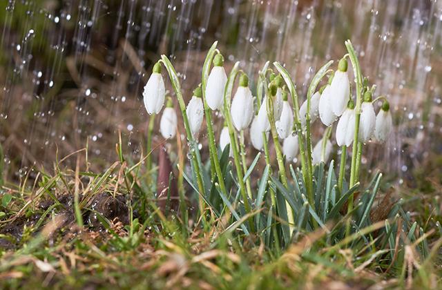 Чем же пахнет весна на самом деле?