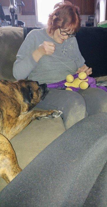 Милые животные терпеливо ждут, когда починят их любимые игрушки
