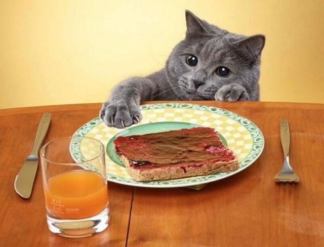 Животные-попрошайки, которым трудно отказать в еде