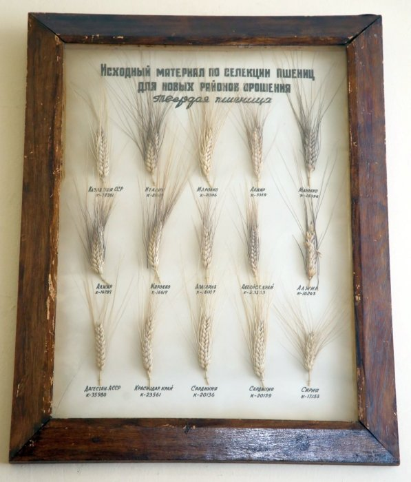 Как ученые спасли коллекцию семян во время блокады Ленинграда