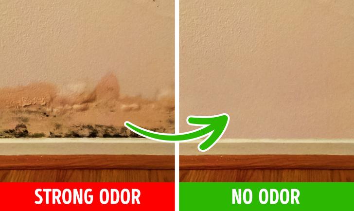 Причины появления плохого запаха в вашем доме