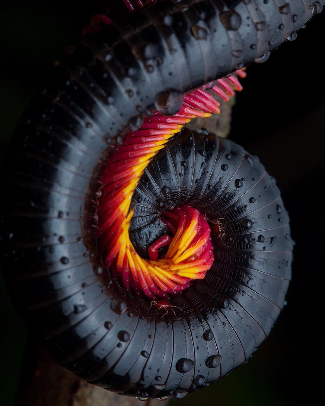 Поразительные существа нашего мира на снимках Фрэнка Дешандола