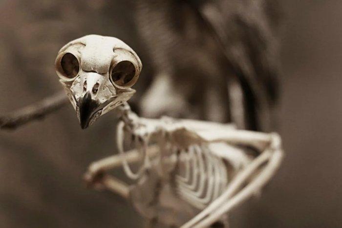 Для чего совам кости в глазах?