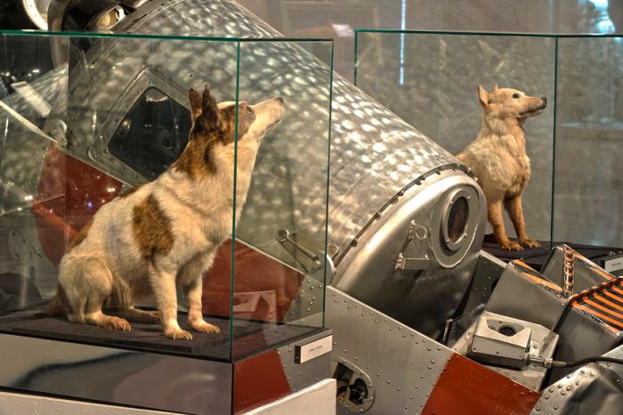 Как сложилась судьба Белки и Стрелки после полёта в космос