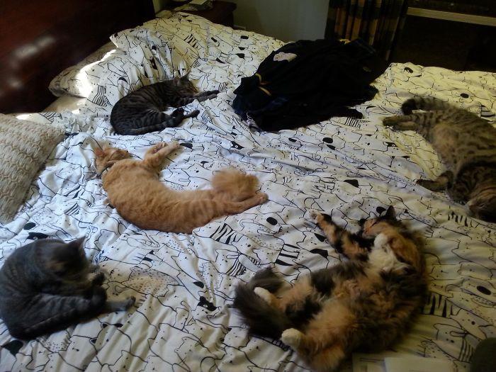 Наглые мордахи заняли хозяйские кровати