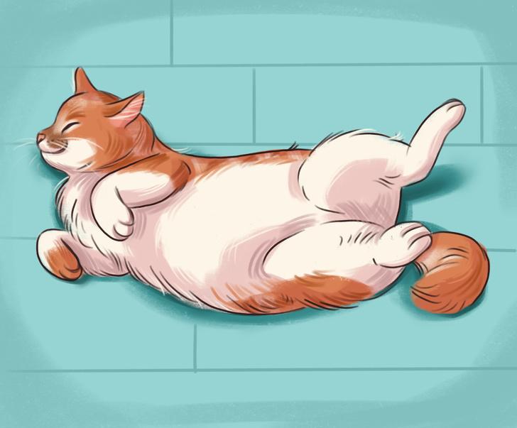 Что поза сна может рассказать о вашей кошке?