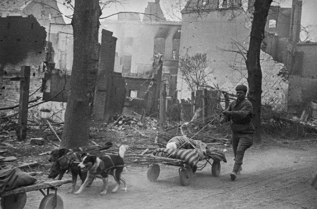 Интересные фотографии времен Второй Мировой войны
