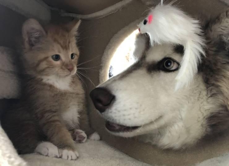 Животные, которые просто любят тусоваться вместе