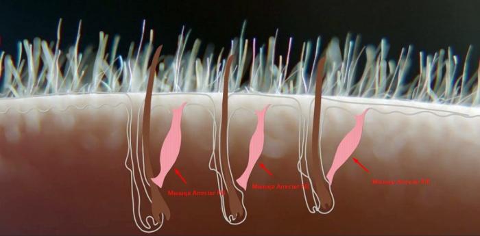 Бесполезные органы в теле человека от предков
