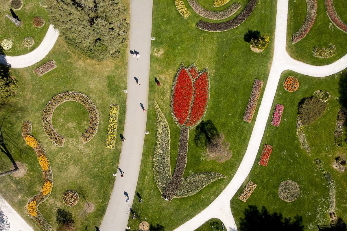 Фестивали цветущих тюльпанов в Нидерландах и Швейцарии