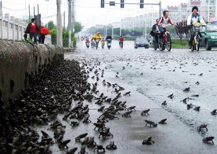 Существует ли дождь из лягушек в реальности?