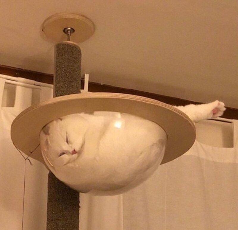 Эти котики готовы спать в любом месте и позе