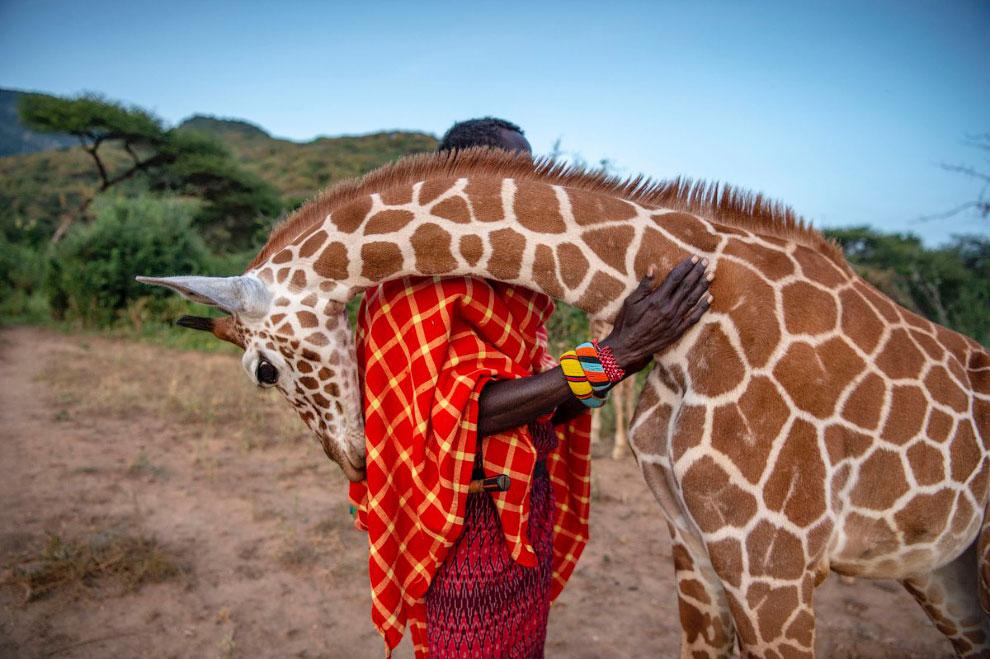 Лучшие снимки с конкурса BigPicture Natural World Photography 2020 Природа