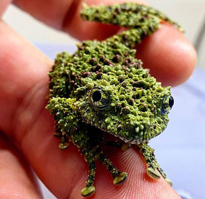 Мшистые лягушки - настоящие мастера маскировки