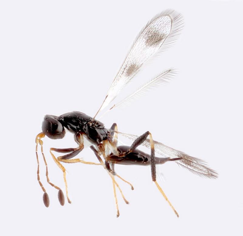 Самые маленькие среди насекомых в мире