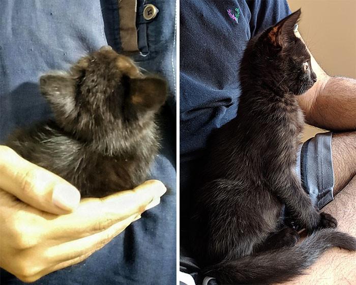 Котики на снимках до и после того, как они обрели тёплый дом