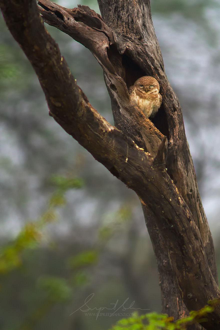 Птицы и животные тропических лесов Индии от Суприта Саху