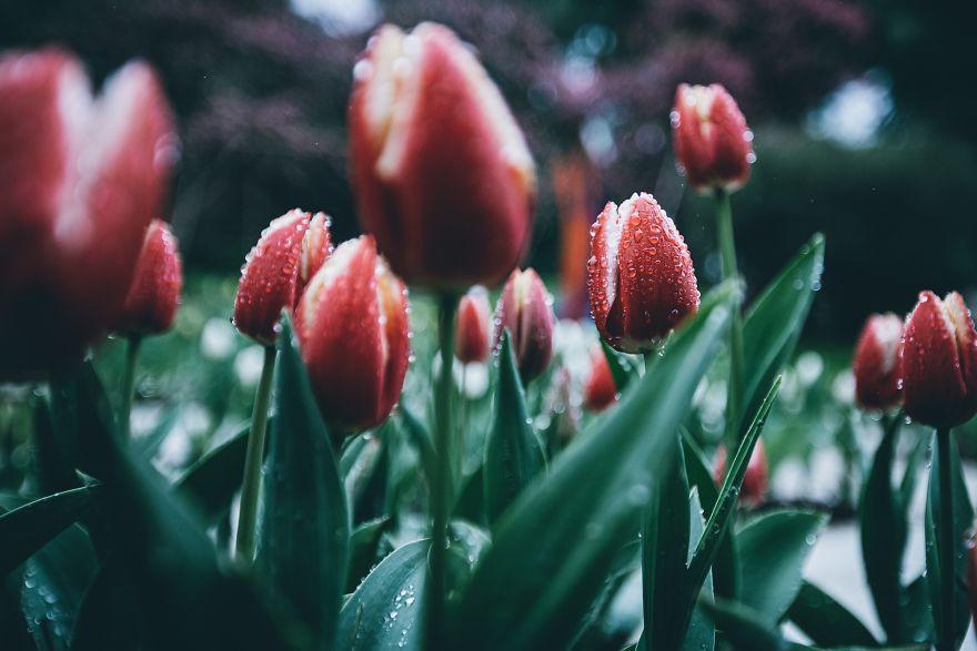 Весна на снимках фотоконкурса #Spring2020 от Agora Images