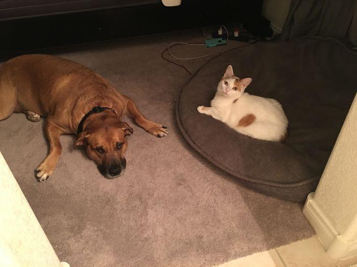 Котики, которые выгнали собак из их же собственных лежанок Животные
