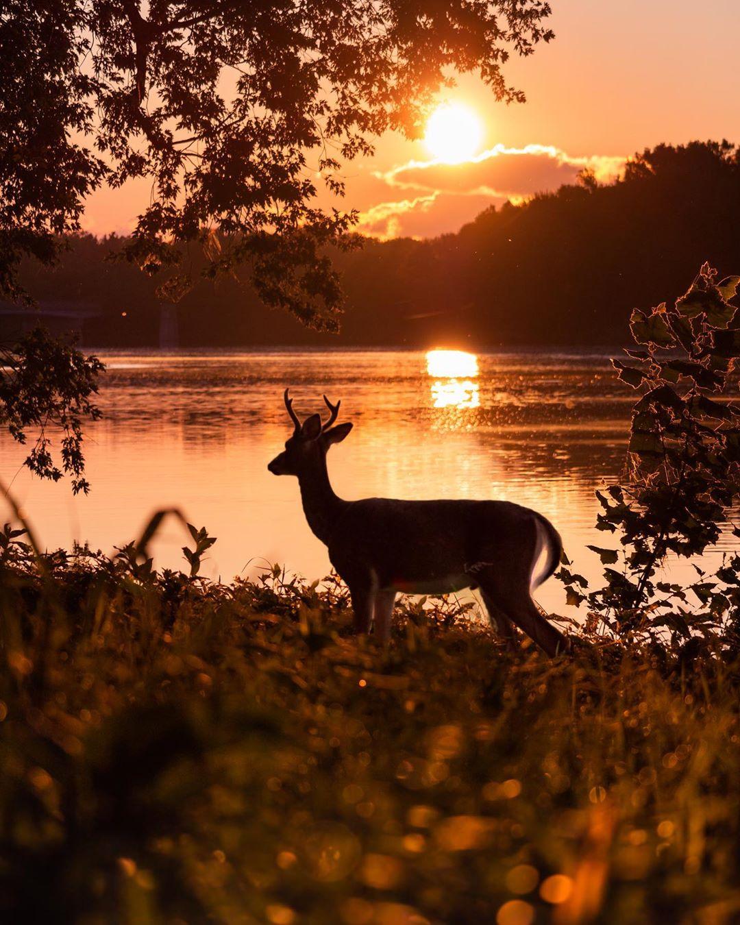 Красота природы и животных на снимках Логана Брауна (ФОТО)