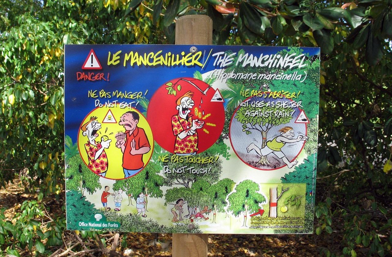 Манцинелла - самое ядовитое дерево в мире