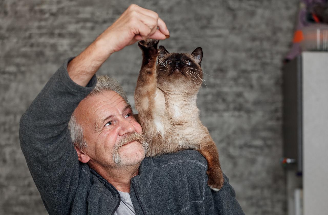 Зачем и почему котики мурчат