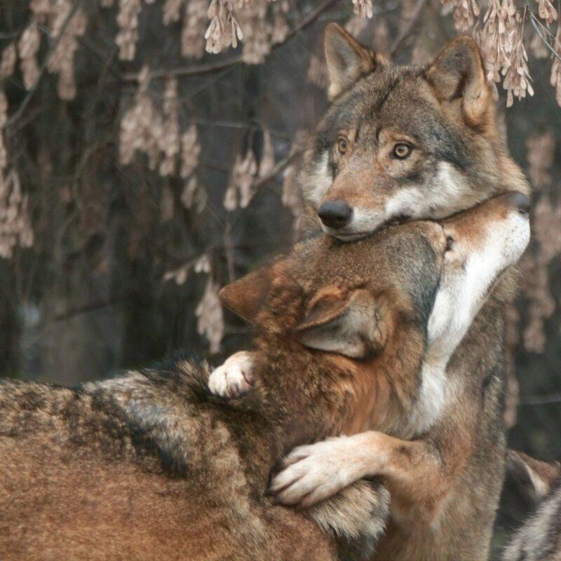 Милые снимки любви и нежности диких животных