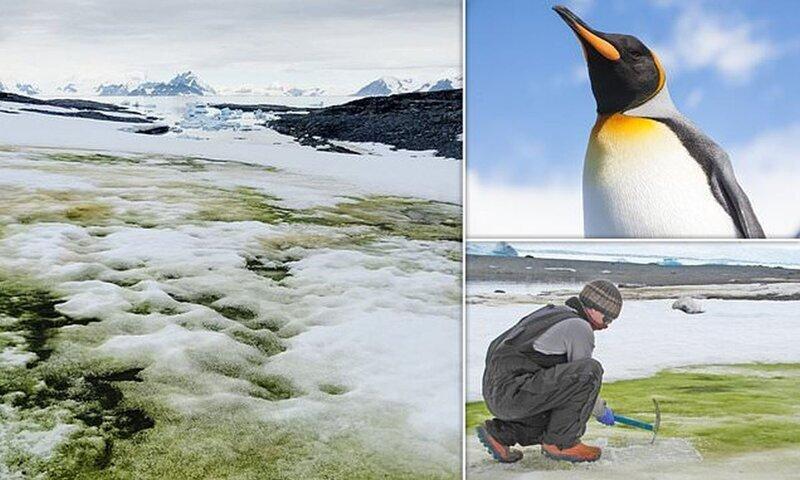 Антарктида начала стремительно зеленеть
