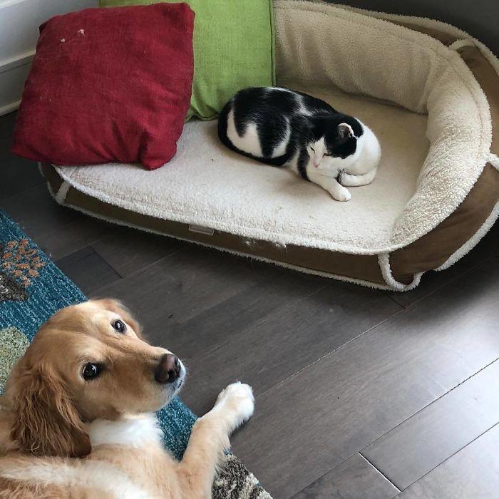 Наглые кошачьи мордахи, которые выгнали собак с лежанок