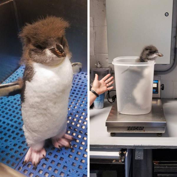 Как люди взвешивают маленьких животных