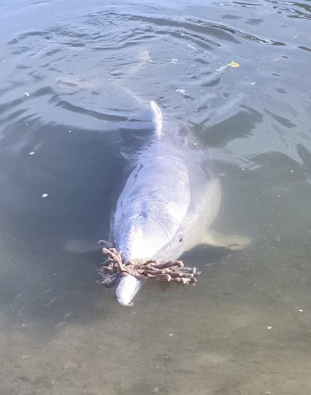 Мистик - дельфин-кладоискатель из Австралии