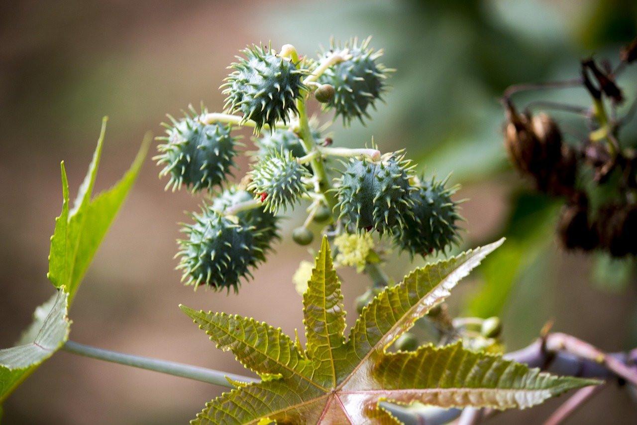 Самые смертельные растения нашей планеты