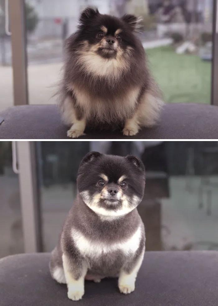 Этих собак просто не узнать после стрижки