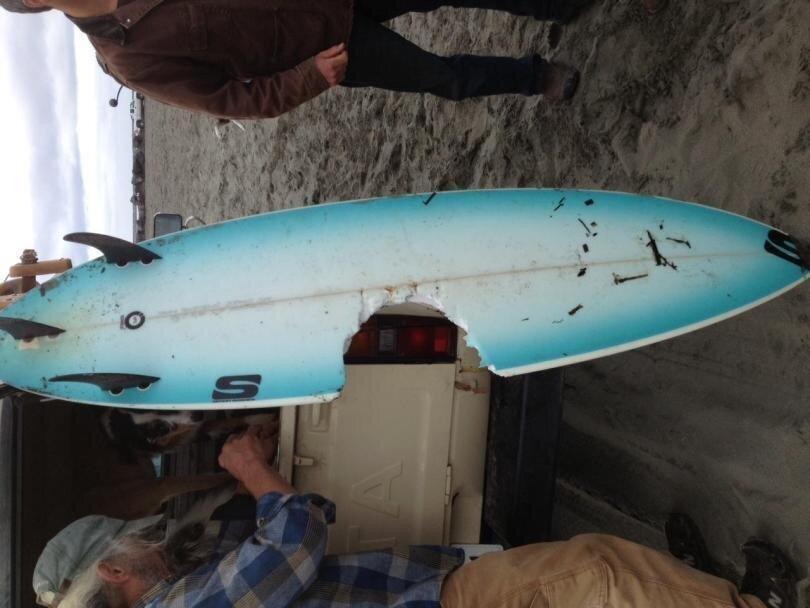 Серфингисты и укусы акул, после которых не было больно