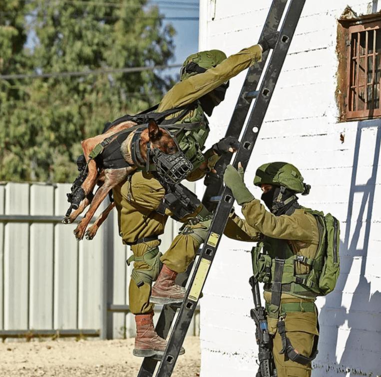 Как собаки служат в израильской армии
