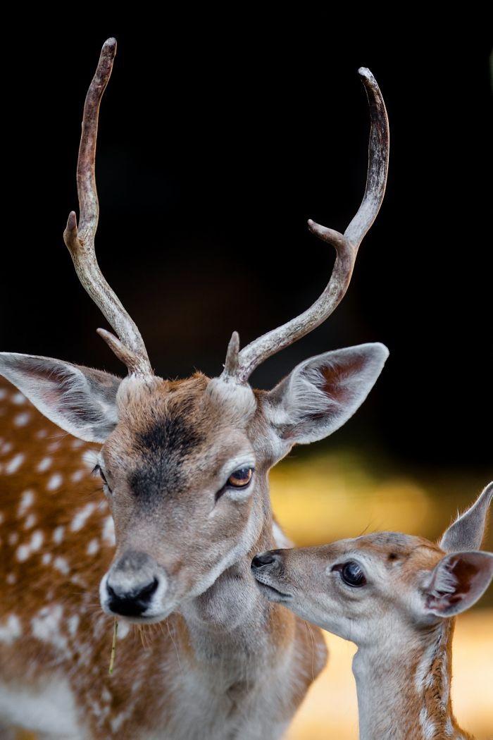 Любовь и привязанность между матерями и их детьми мире животных