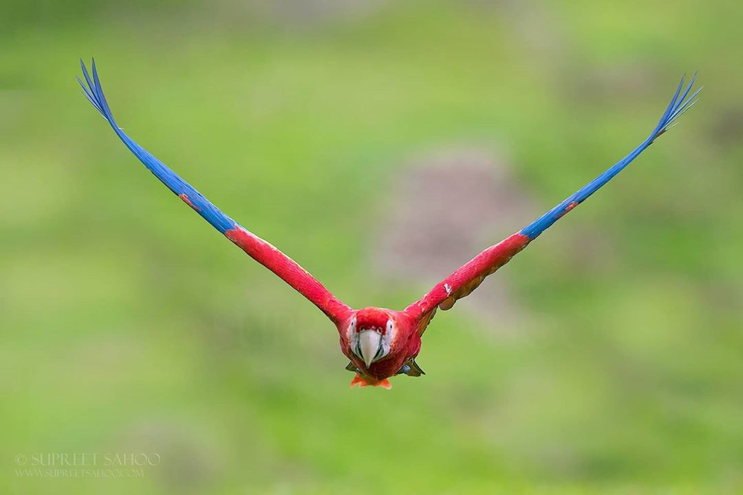 Дикие птицы на снимках Суприта Саху