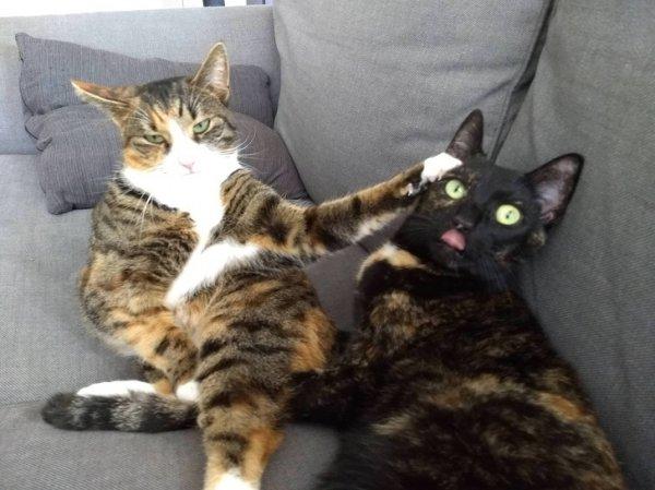 Забавные конфликты между домашними любимцами