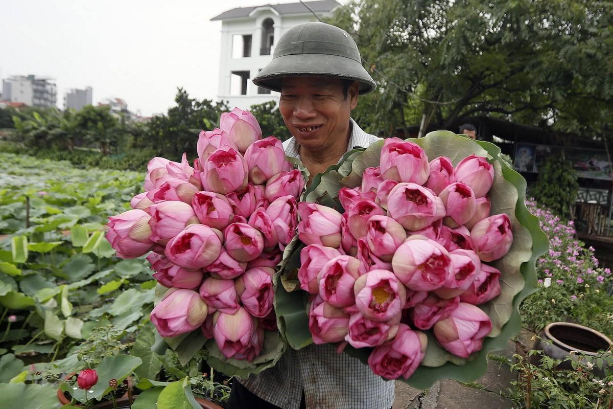 Ежегодный сбор цветов лотоса во Вьетнаме