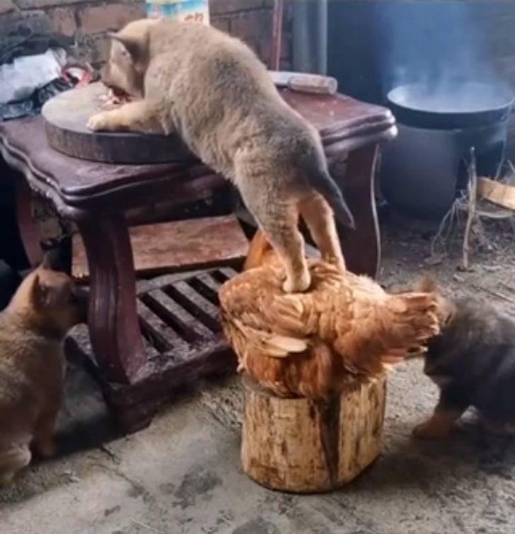 Домашние животные, у которых нет ни грамма совести