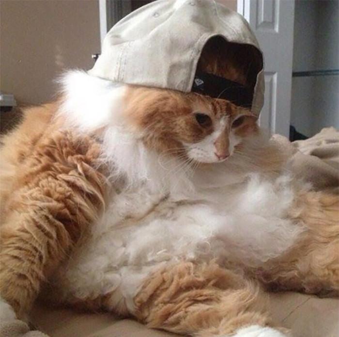 Фотографии котиков, которые сидят на своих пятых точках