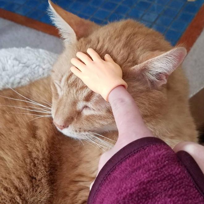 Руки-напальчники, чтобы повеселить вас и вашего питомца